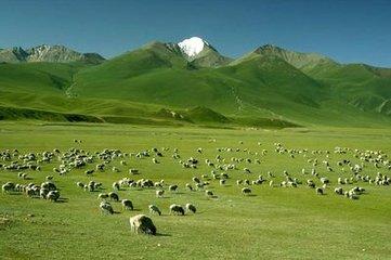 新疆天山牛羊毡房风景